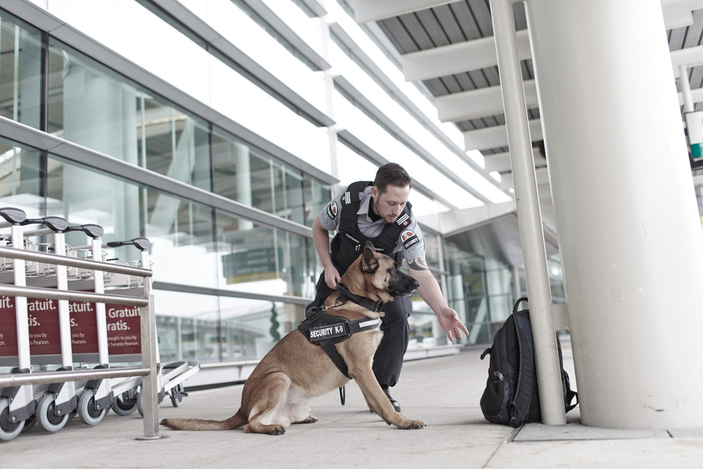 Canine Explosives Detection