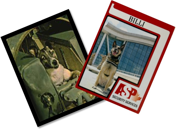 Canine Trading Cards Get an Overhaul